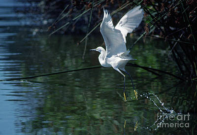 Photograph - Birds_12-8 by Craig Lovell