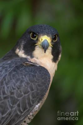 Photograph - Birds_d5 by Craig Lovell