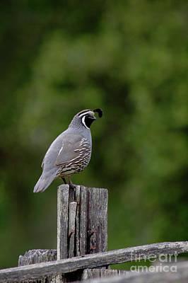 Photograph - Birds_d87 by Craig Lovell