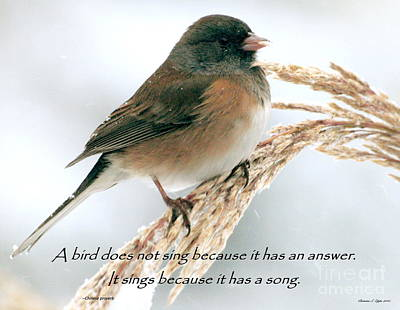 Photograph - Birdsong by Christine Zipps
