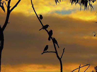 Photograph - Birdstop by Mark Blauhoefer