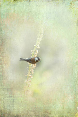 Photograph - Birdthree by Marilyn Wilson