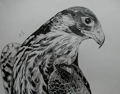 Drawing - Birdy by Melita Safran