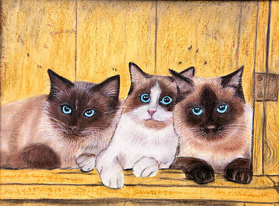 Pastel - Birman Boys by Jan Amiss