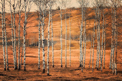 Birtch Trees Art Print by Naman Imagery