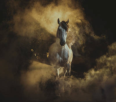 Photograph - Birth Of Pegasus by Ekaterina Druz