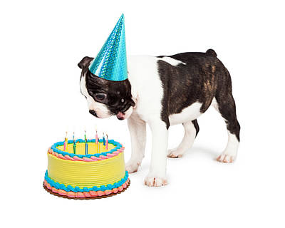 Birthday Dog Blowing Out Candles Print by Susan Schmitz