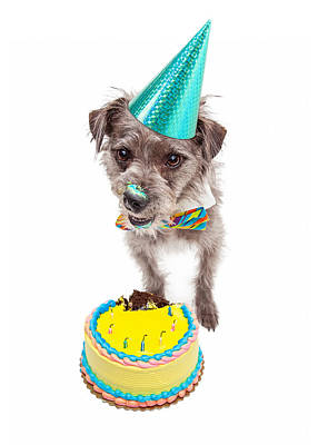 Birthday Dog Eating Cake Art Print by Susan Schmitz