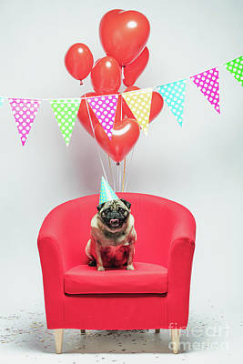 Photograph - Birthday Pug Dog On A Festive Background. by Michal Bednarek