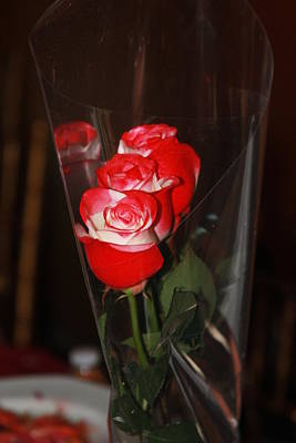 Photograph - Birthday Roses by Vadim Levin