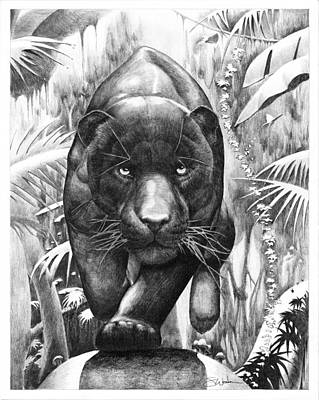 Rain Forest Animals Drawing - Bischu, The Black Panther by Steve Wedan