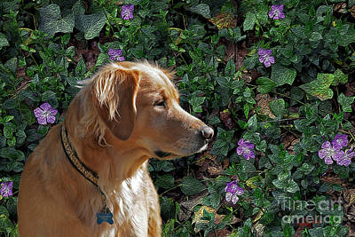 Retrievers Digital Art - Biscuit With Flowers by Anthony Forster