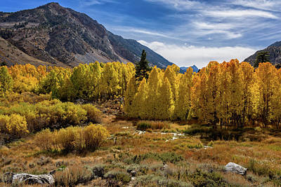Bishop Creek Aspen Art Print