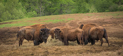 Photograph - Bison 2 by Joye Ardyn Durham