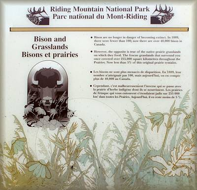 Photograph - Bison And Grasslands by David and Lynn Keller