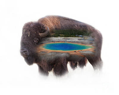 Bison And Great Prismatic Spring Double Exposure Art Print