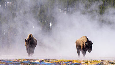 Photograph - Bison At Biscuit Basin by Janet Jones