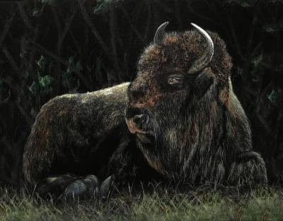 Bison At Leisure Original by Ronnie Hocutt