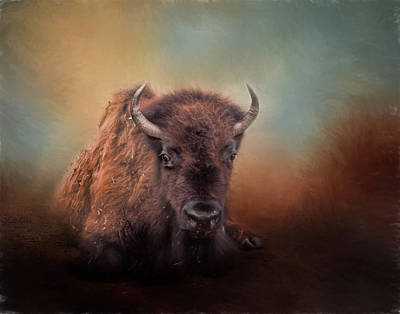 Photograph - Bison At Rest by David and Carol Kelly