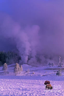 Photograph - Bison Bison Bison Winter Morning Wild Wyoming by Dave Welling