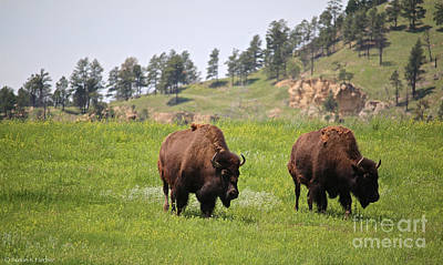 Photograph - Bison Brothers by Susan Herber