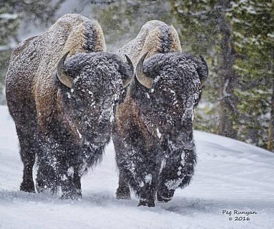 Photograph - Bison Buddies by Peg Runyan
