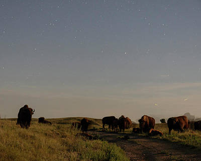 Photograph - Bison By Moonlight 01 by Rob Graham