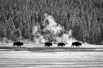 Photograph - Bison By The Thermal - Yellowstone by Stuart Litoff