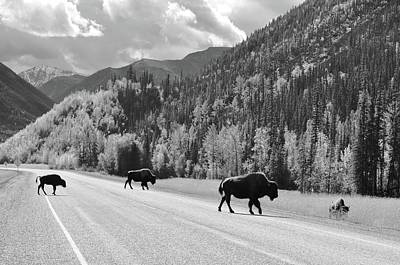 Photograph - Bison Crossing by Joe Burns