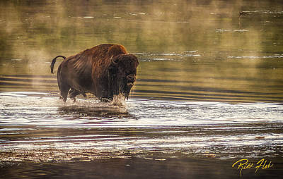 Photograph - Bison Crossing by Rikk Flohr