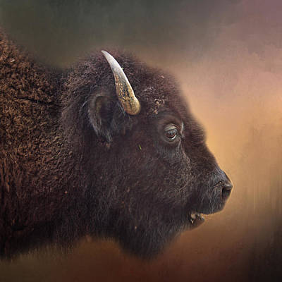 Photograph - Bison by David and Carol Kelly