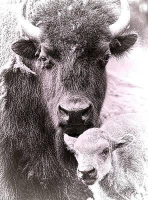Photograph - Bison Family by Steve McKinzie
