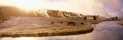 American Bison Photograph - Bison Firehole River Yellowstone by Panoramic Images