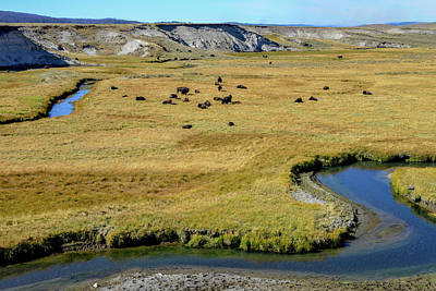 Photograph - Bison Herd By Yellowstone River by Marilyn Burton