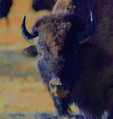 Photograph - Bison Impression by Michael Balen