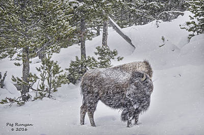 Photograph - Bison In Blizzard by Peg Runyan