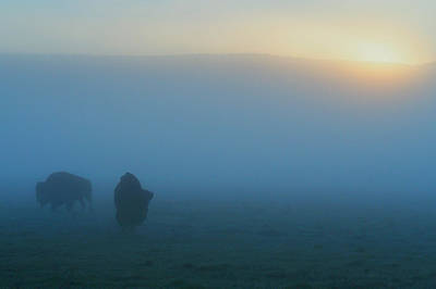 Yellowstone Photograph - Bison In The Mist by Ryan Scholl