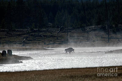 Photograph - Bison In The River by Cindy Murphy - NightVisions