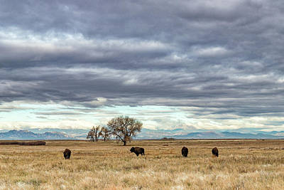 Photograph - Bison In The Shadow Of The Mountains by Tony Hake