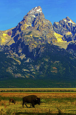 Photograph - Bison In The Tetons by Jeff Kurtz