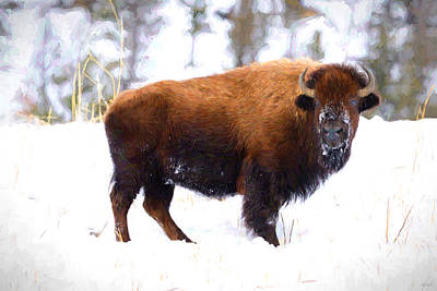 Photograph - Bison In Winter by Greg Norrell