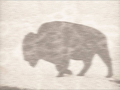 Harsh Conditions Drawing - Bison Memory by Anthony Robinson
