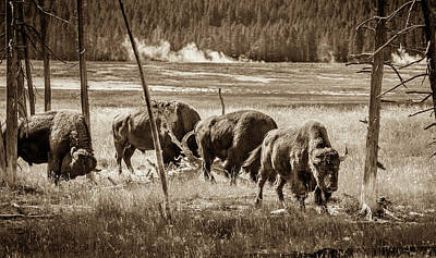 Bison Of The Yellowstone Art Print by TL Mair
