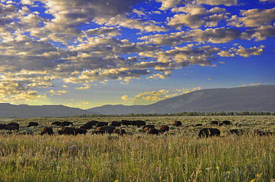 Bison On Antelope Flats Wy Art Print by Vijay Sharon Govender