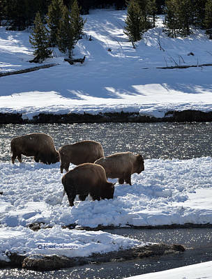 Art Print featuring the photograph Bison On River Strand by Kae Cheatham