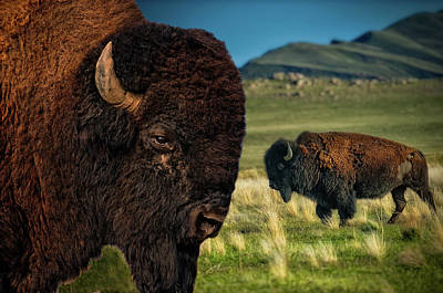 Bison On The Plain Art Print by Paul W Sharpe Aka Wizard of Wonders