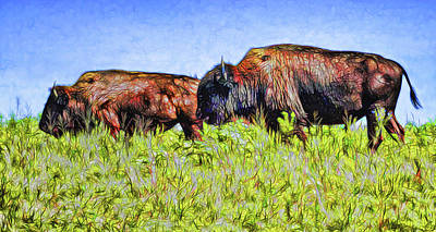 Digital Art - Bison Pair On The Prairie by Ann Powell