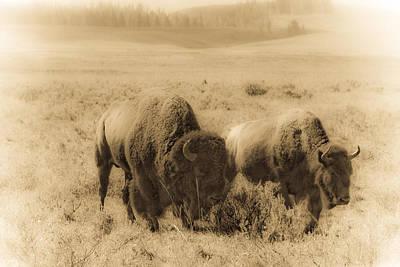 Bison Pair Art Print by Patrick  Flynn