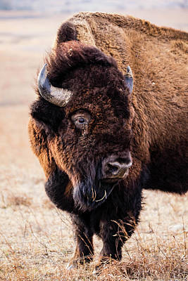 Patriotic Signs - Bison Profile by Angie Harris
