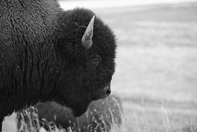 Photograph - Bison by Rae Ann  M Garrett